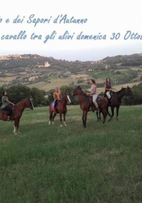 Passeggiata a cavallo tra gli ulivi - FESTA DELL'OLIO E DEI SAPORI D'AUTUNNO 2016